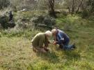 September: Het afpalen van het bouwterrein, om zo stukken terrein met bijzondere planten te beschermen